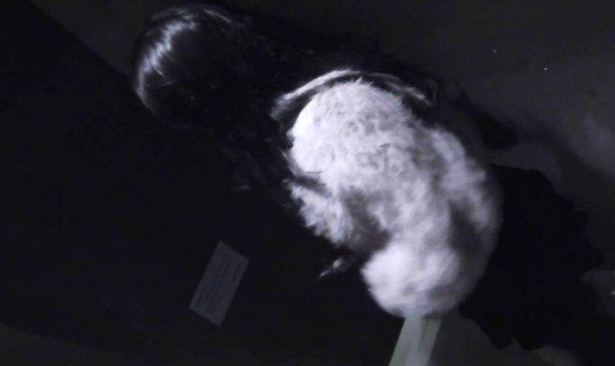 世界の射窓から vol.35 女厕偷拍, 美罗城 南宁国贸 OLのボディ   ハプニング  67PIX